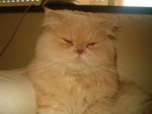 /my cat...