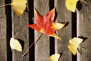 /Tons do outono