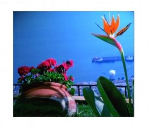 /O Vaso e a Flor