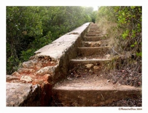 /Step by step