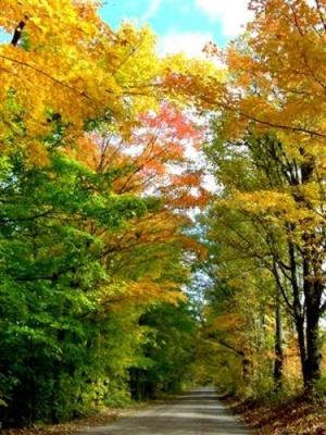 Outros/Outono II