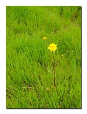 /Verde e Amarelo