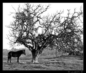 /Era uma vez... a Arvore e o cavalo
