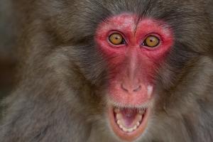 Animais/imagens do mundo animal - Anacleto