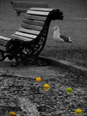 """Paisagem Urbana/""""The Garden"""""""