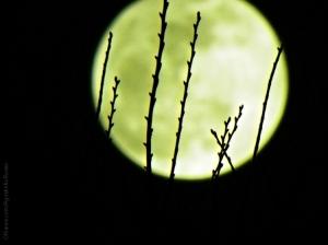 """Paisagem Natural/""""Lua  Matreira"""""""