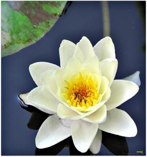 /flor I