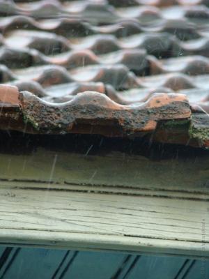 Outros/A natureza trata de limpar o que fico de 2011... F