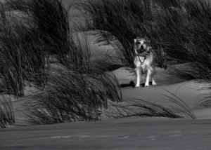 /Le chien des dunes