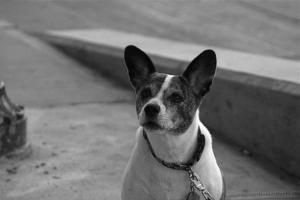 Animais/NYC Dog