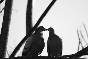 /so in love