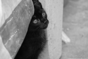 Animais/Kitten