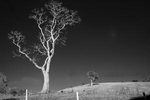 Paisagem Natural/Luz da Serra