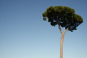 Paisagem Natural/tree of life