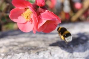 Animais/a caminho do mel