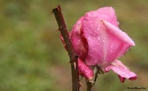 Outros/Cor de Rosa