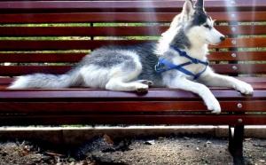 Outros/Descanso Canino