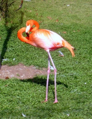 Outros/Flamingo
