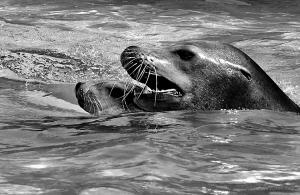 /Mãe ensina-me a nadar