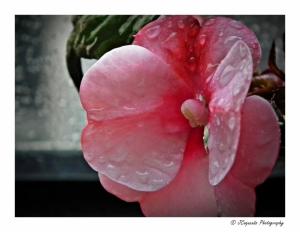 Outros/A translation of beauty - II