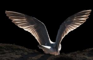 Animais/Nem os anjos escapam do abismo