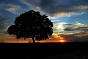 /PDS e solitária árvore
