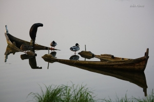 Animais/Calma no lago