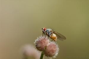 /O poiso da mosca...!