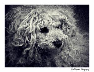"""Retratos/O cão \""""rasta\""""...(Chiado)"""