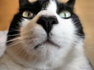 /gatinho. gato. gatão.