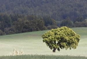 /Campos verdes