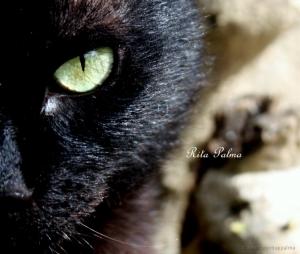 Animais/Olhando-te