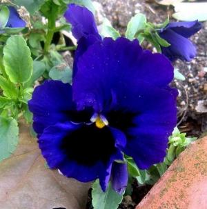 Macro/Violeta