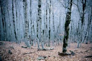 /A melancolia do Inverno.....