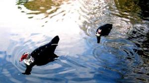 Outros/Nadando