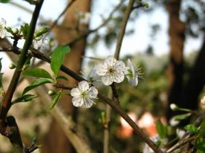 Macro/Flor de Inverno