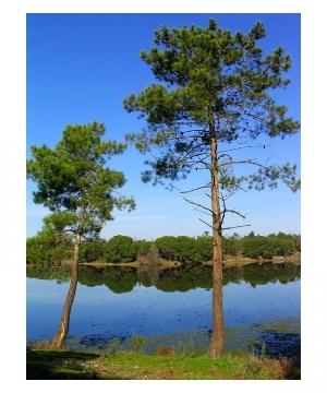/Um pequeno lago...