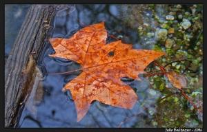 Macro/Folha de Outono