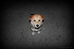 Outros/Abandoned dog