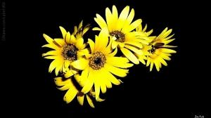 /yellow...