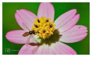/Do latim: Insectum