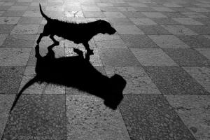 Animais/Doggie