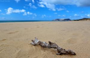 Paisagem Natural/A Natureza encontra o seu porto...