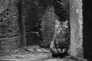 /...o gato...