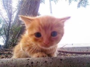 Outros/Gato