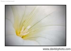 Macro/Detalhe de uma flor