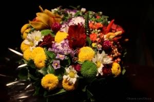 /Flores especiais