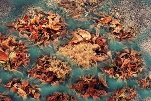 /folhas caídas.