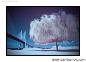 Arte Digital/Olhar sobre a ponte Vasco da Gama