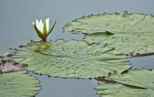 Paisagem Natural/A dama do lago